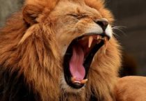 Telcos must be cautiously aggressive to 'Roar out of Recession'