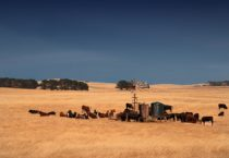 Case study: Connecting cattle farmers with a Broadband Global Area Network