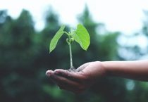 A telco's role in sustainable business: Can the telecoms industry boost sustainability?